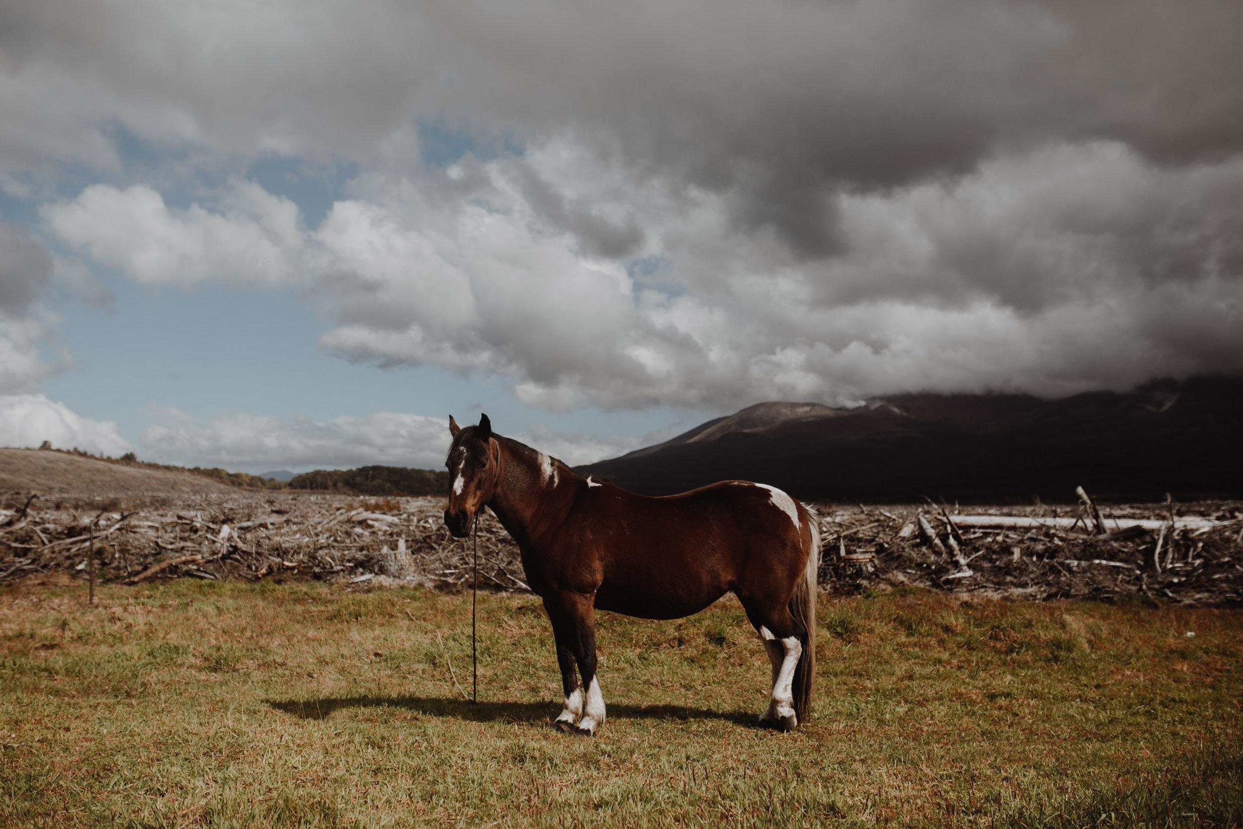 New Zealand- Grace and Jaden Photography (248).jpg