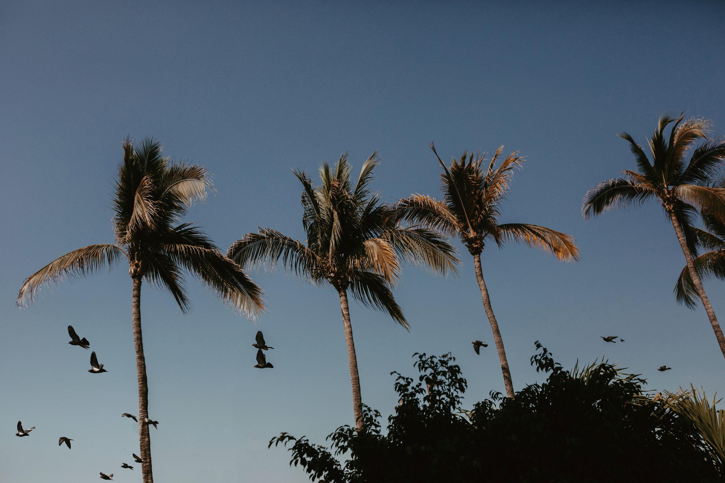 Puerto Vallarta Destination  Wedding- Grace and Jaden photography (4).jpg