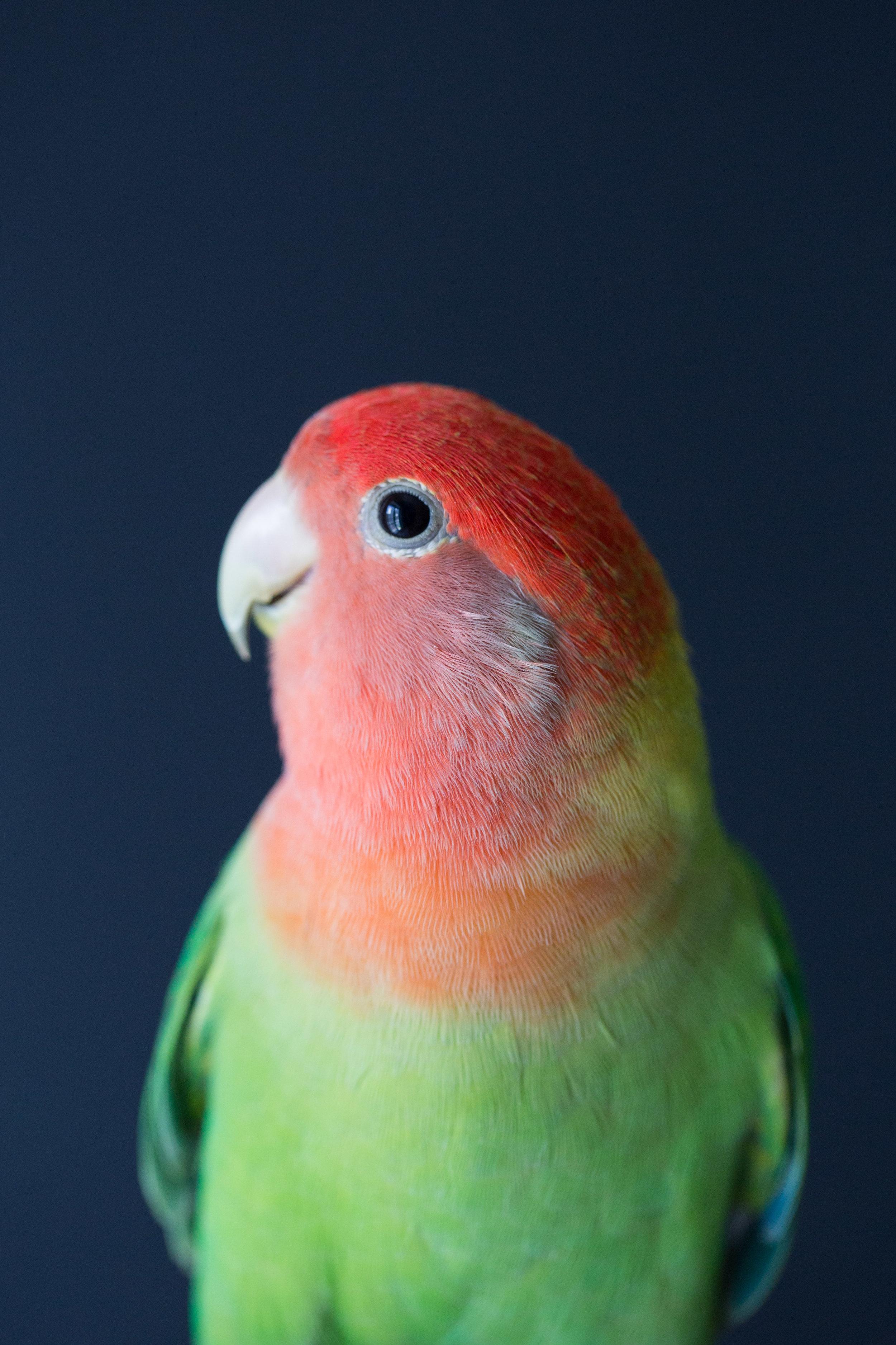 2019_calirebirds-9.jpg