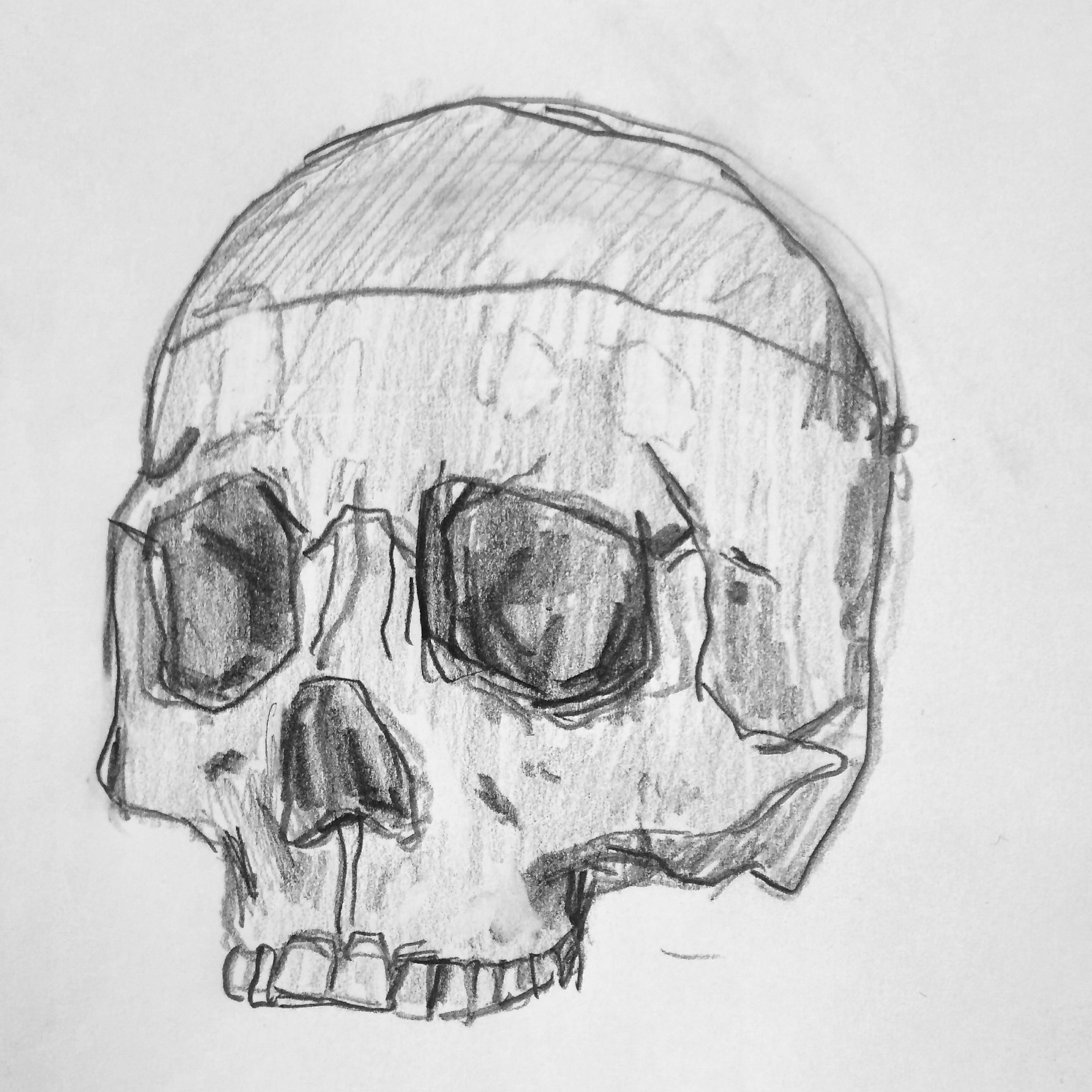 Skull  2016, pencil on paper, 6 x 8 in, from a sketch journal