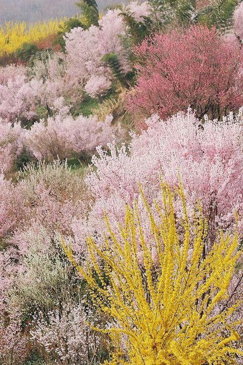 Spring in Fukushima.