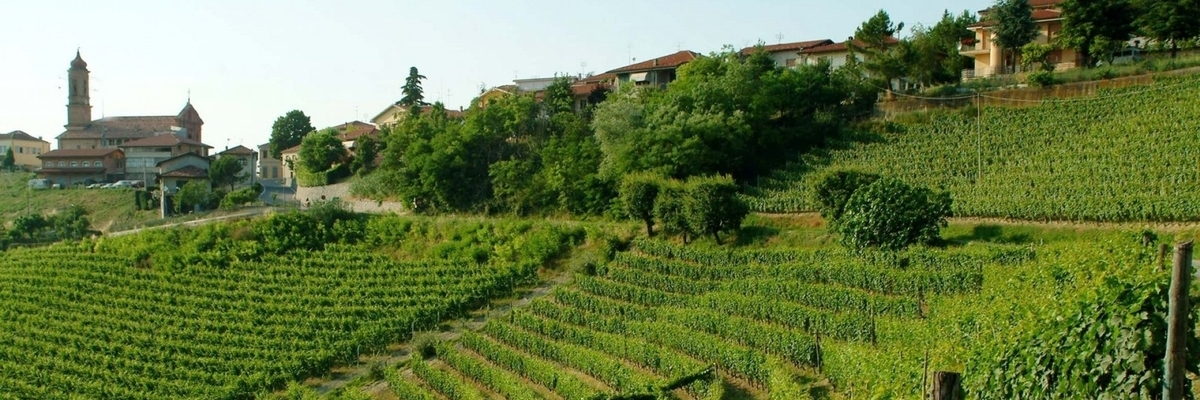 Lodali Vineyards around Treiso, Langhe, Italy