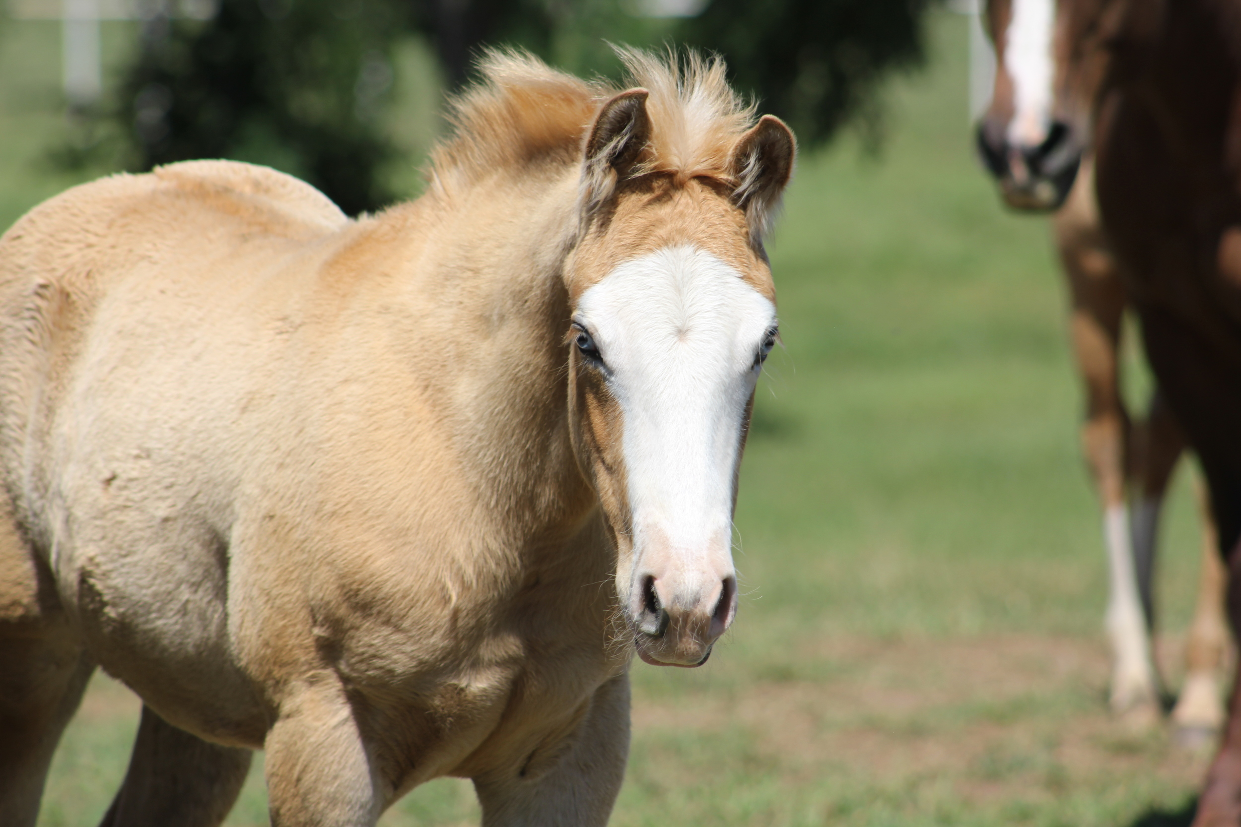 YJ x Gunners Dollface Colt May.JPG