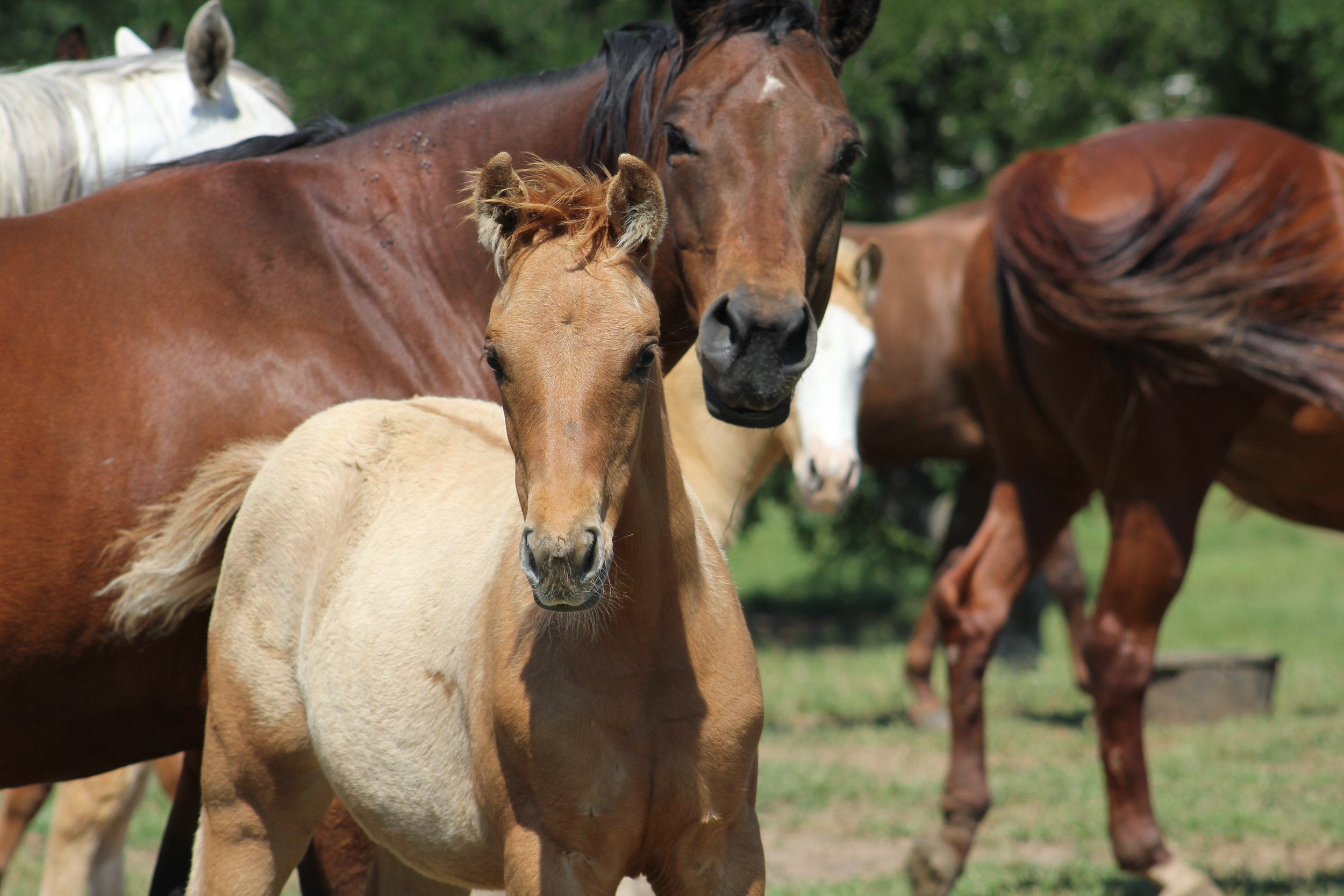 2015 Filly