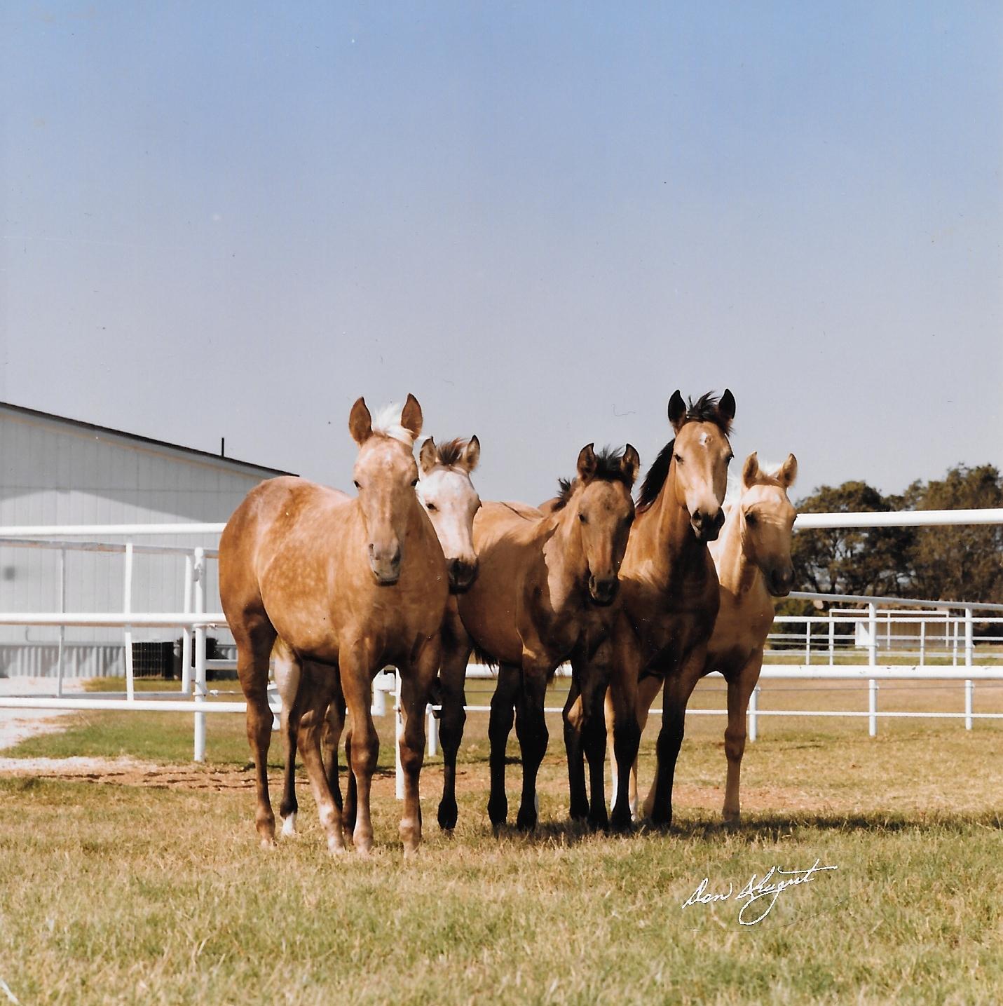 HDI First Foal Crop.jpeg