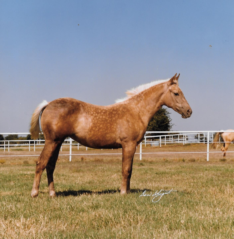 HDI First Foal Crop 3.jpeg