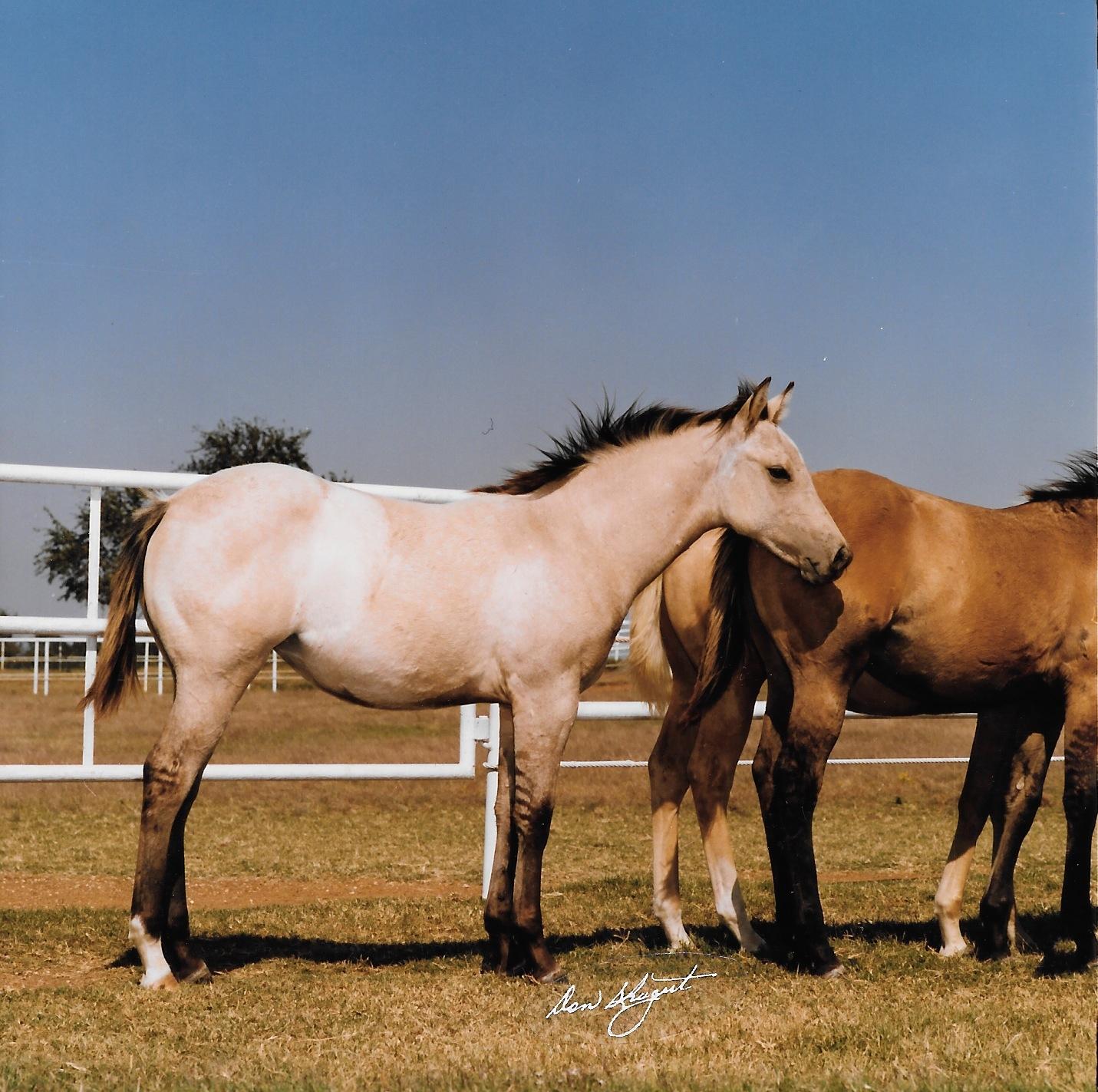 HDI First Foal Crop 1.jpeg