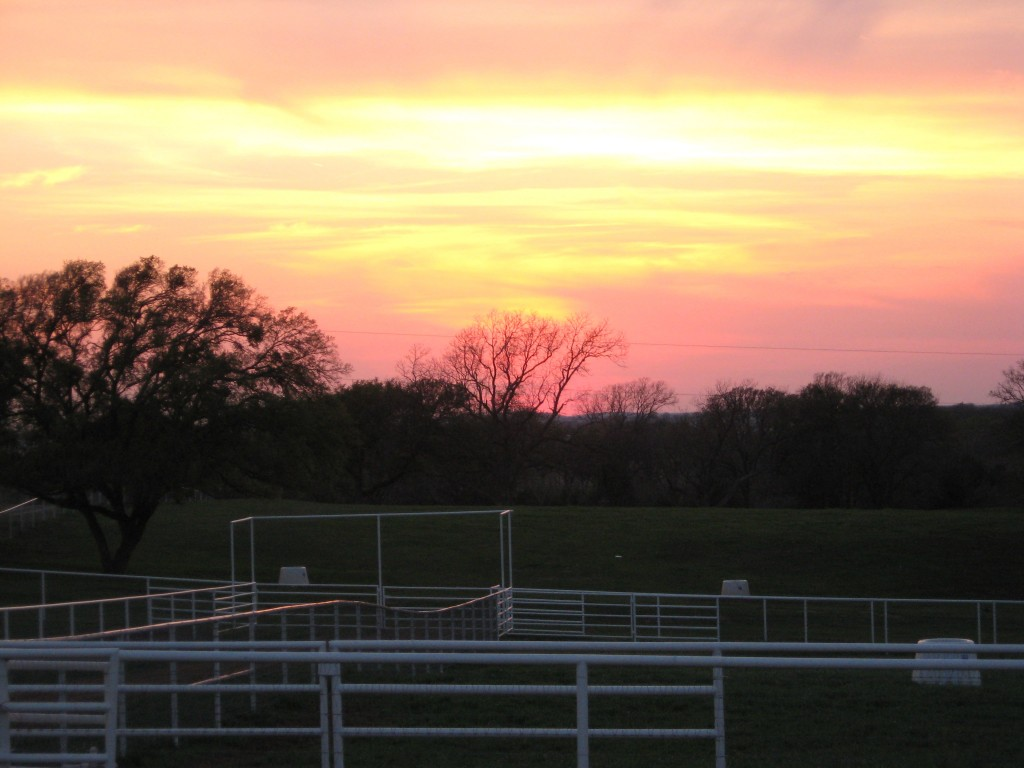 Sunset over pasture.jpg