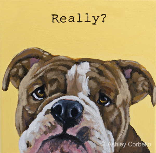 Pit Bull pet portrait by Ashley Corbello