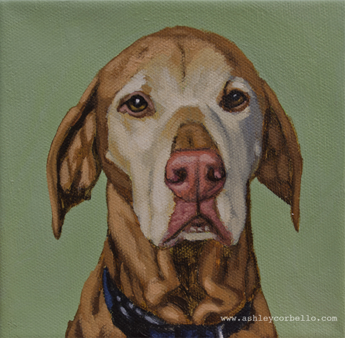 hound-madison-web.jpg
