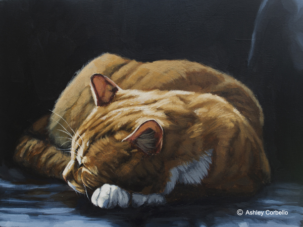 Orange Tabby sleepingweb.jpg