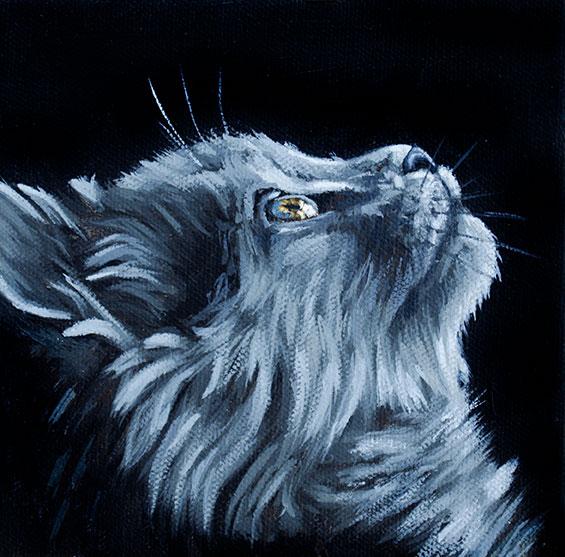 ashleycorbello-grey-long-haired-cat.jpg