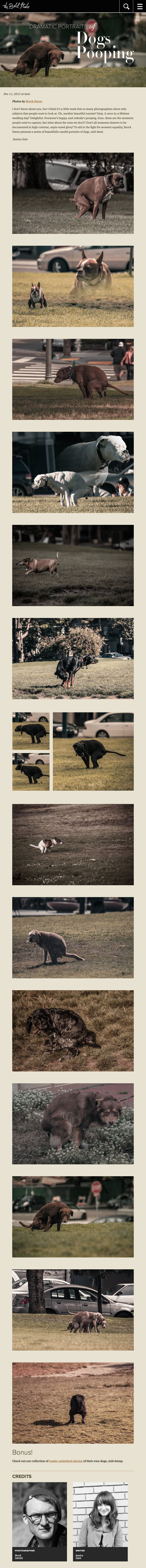 Dogs Pooping.png