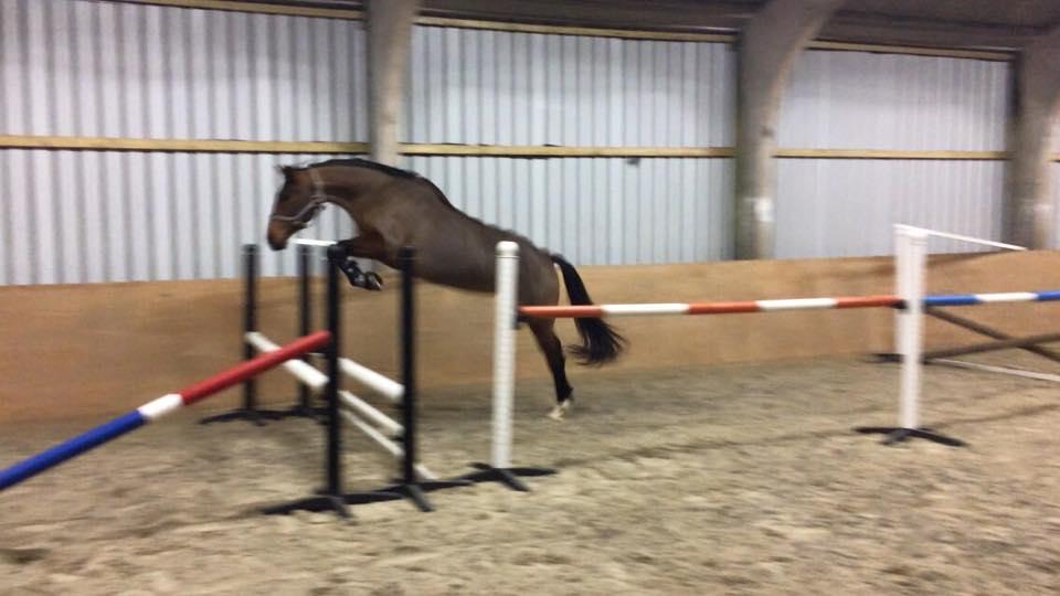 Paloma Loose Jumping.jpg