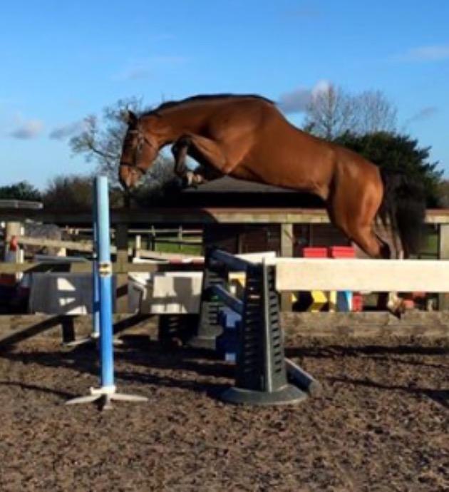 Brusck Jumping Nov 2015.jpg