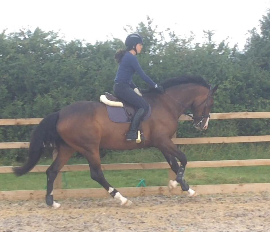 Gucci Cantering Aug 16.jpg