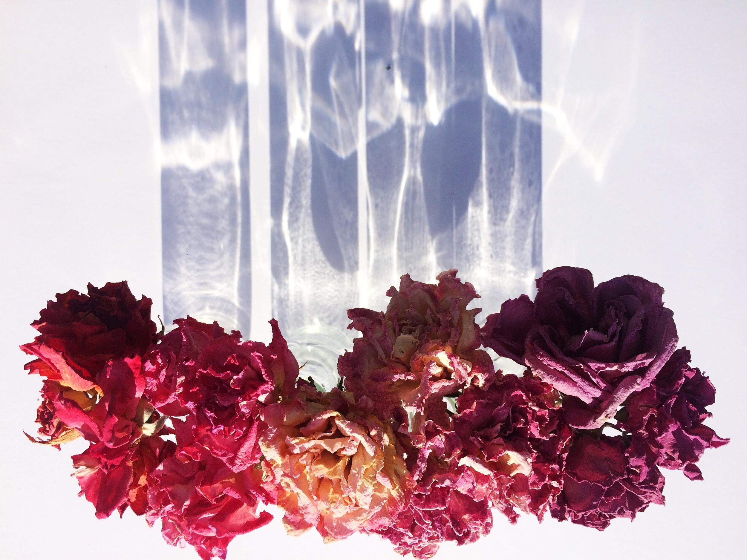 Dead Flowers Series