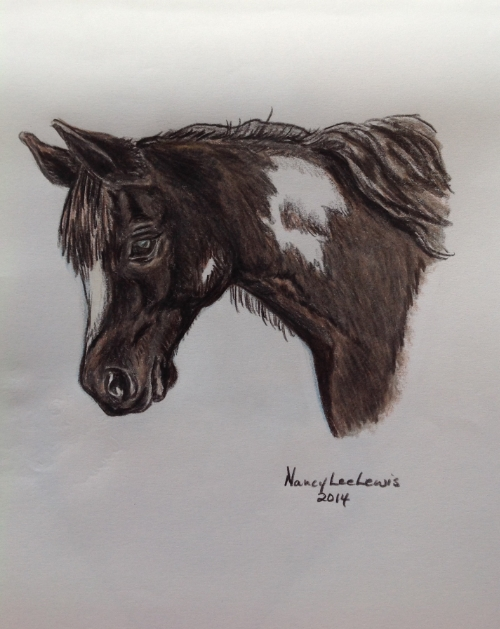 Pony, colored pencil, by Nancy Lee