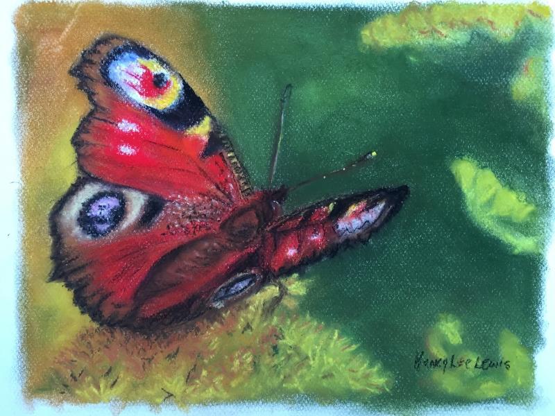 Butterfly, soft pastels, by Nancy Lee