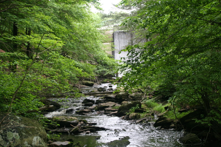 stream dam.jpg