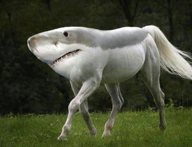 vows and promises shark horse.JPG