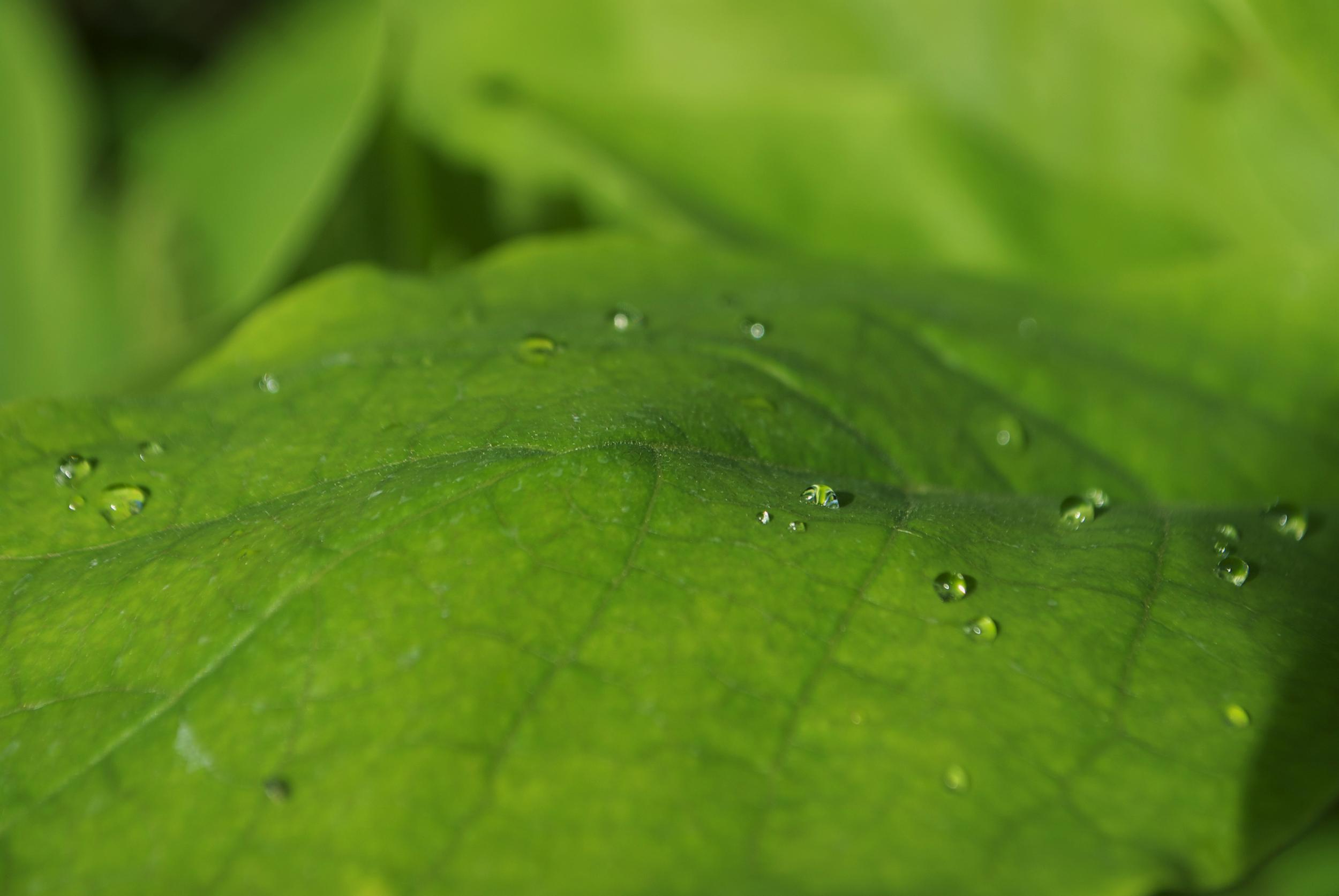 MACRO | Leaf