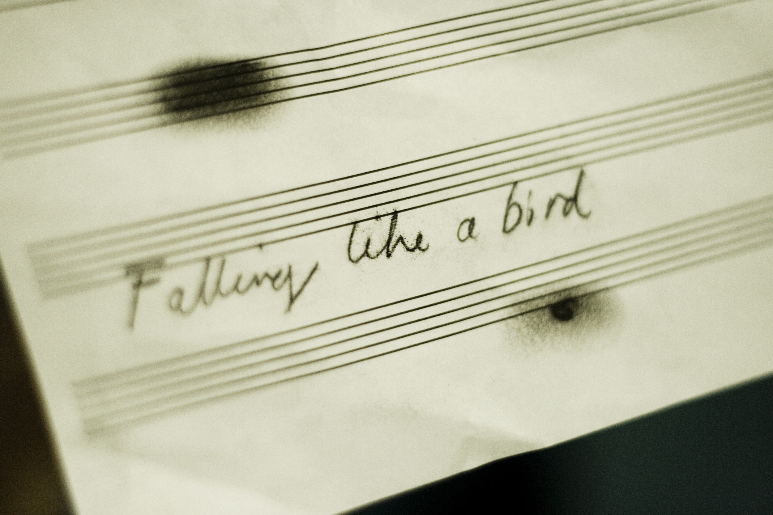 Falling like a bird (2016)