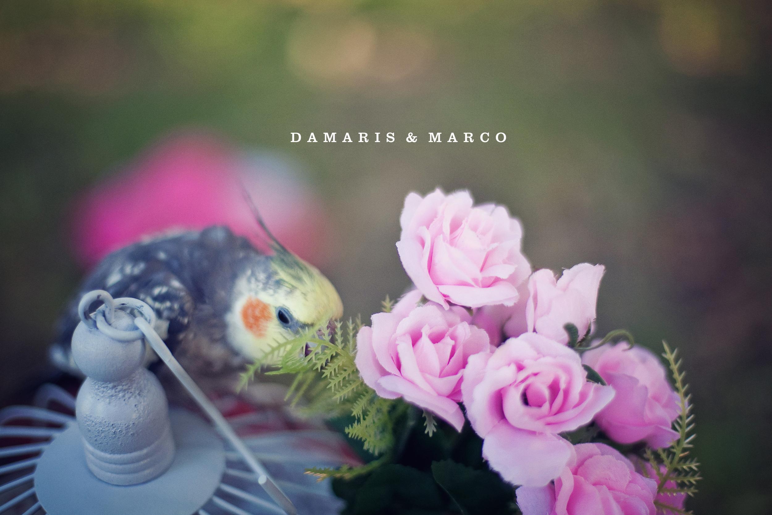 damaris_marco_001.jpg