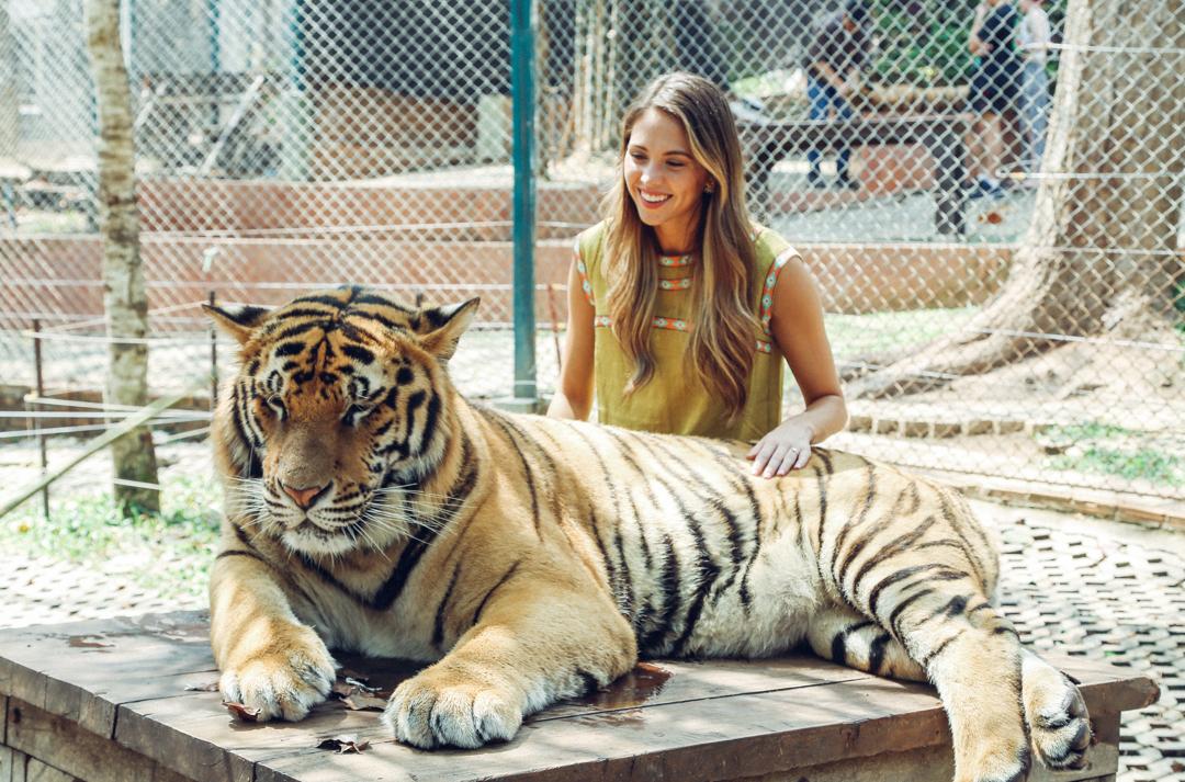 tigre-1.jpg