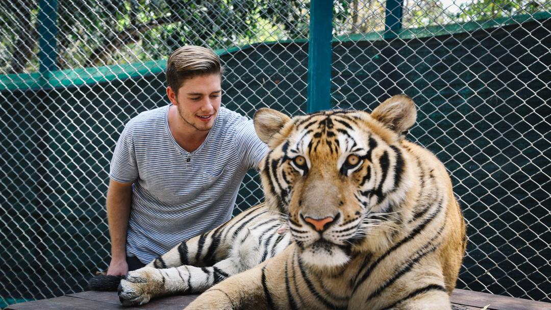 tigre-4.jpg