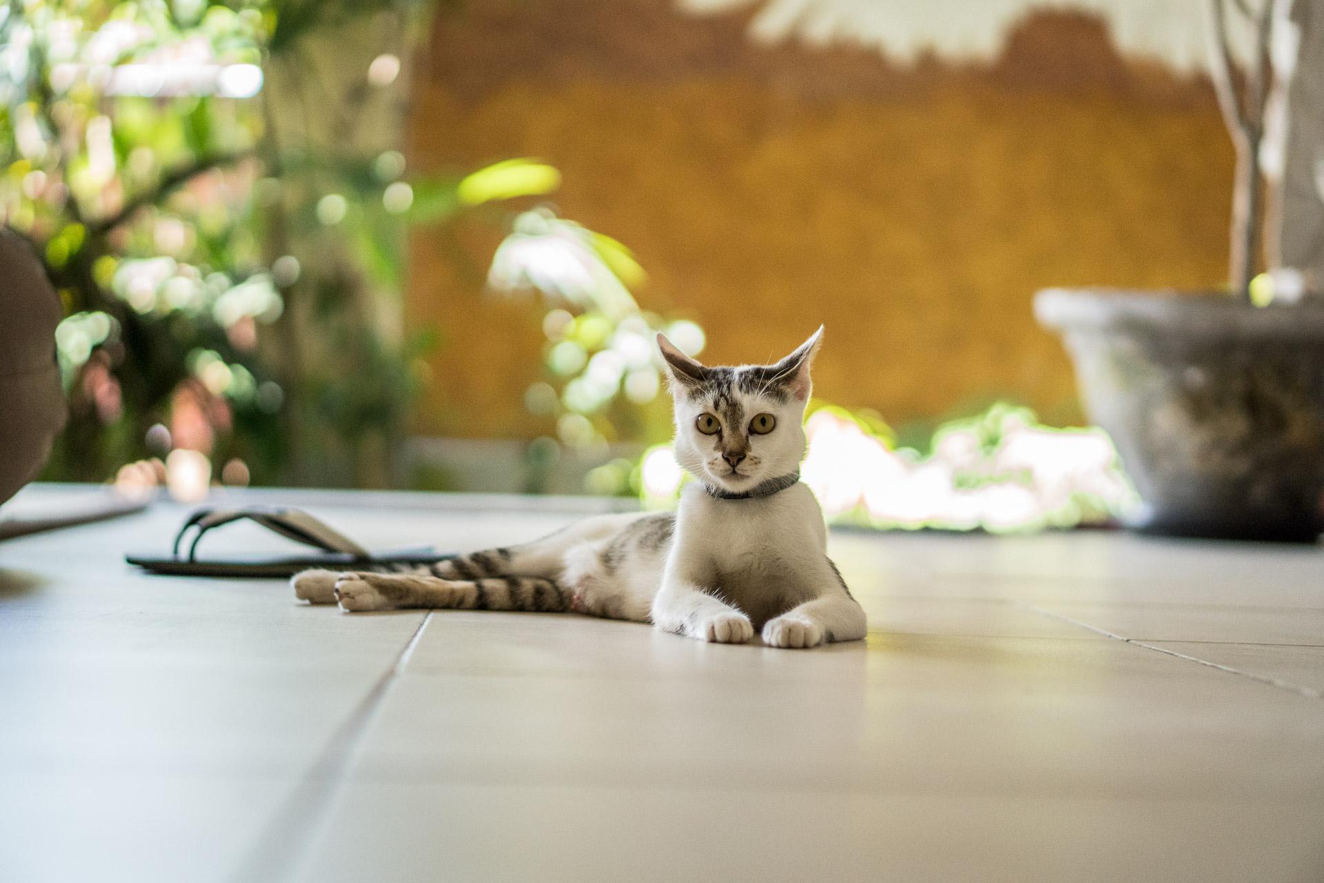 Sweet Cat.jpg