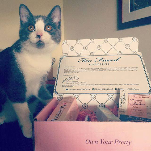 Carrie Okie herself awarding Too Faced in person (well, in cat)!