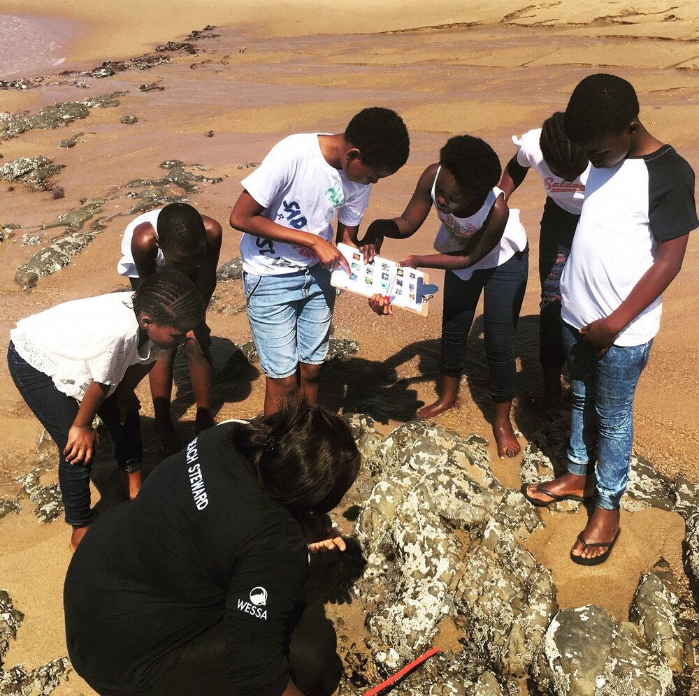 Salt Rock_Environmental Education_learners finding rocky shore animals and plants.jpg