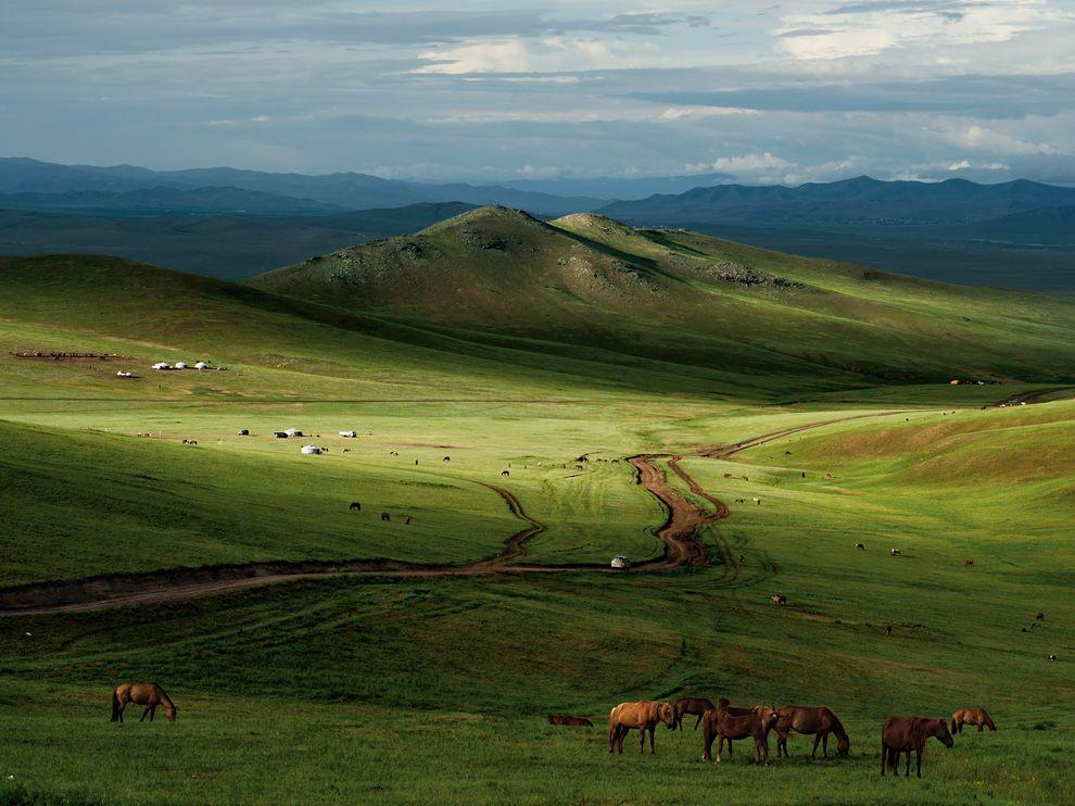 horses-mongolia-leong_49122_990x742.jpg