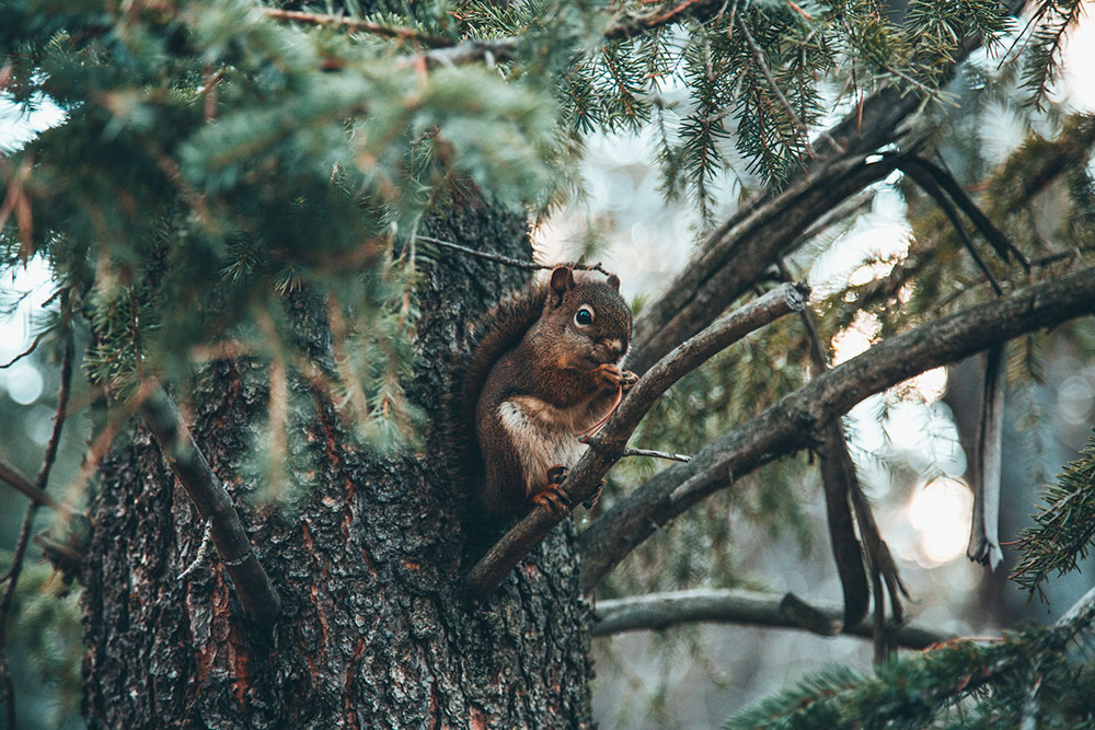 squirrel-leximphoto.jpg