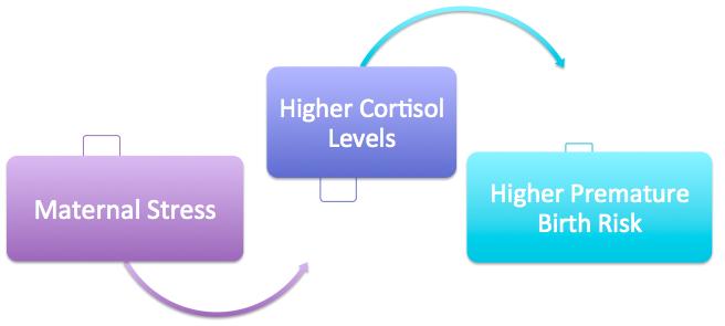 preterm birth cortisol.png
