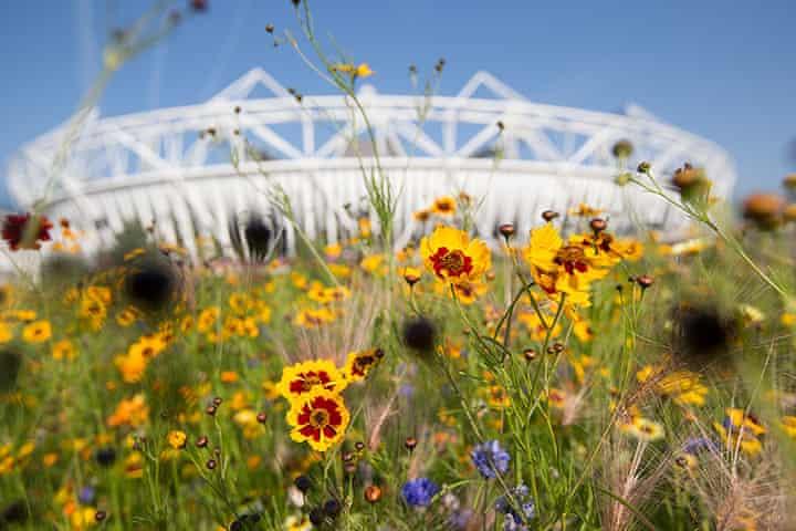 Olympic Gardens, 2012