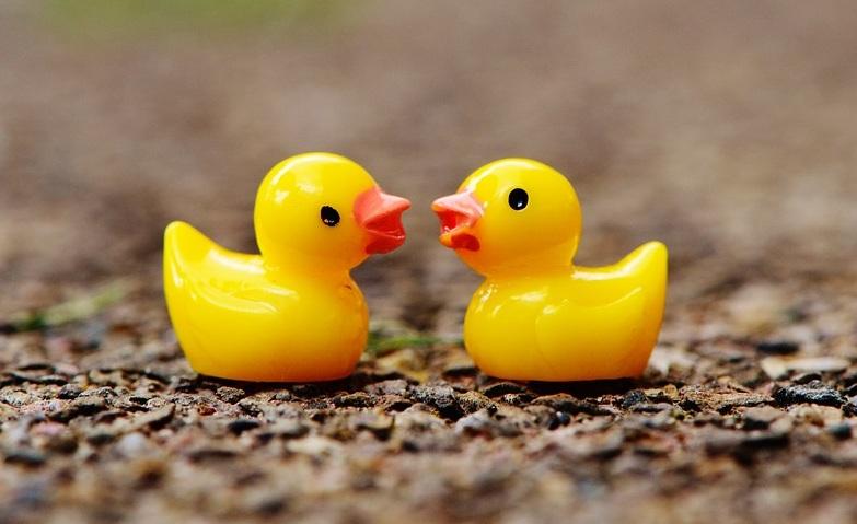 ducks-1339558_960_720.jpg