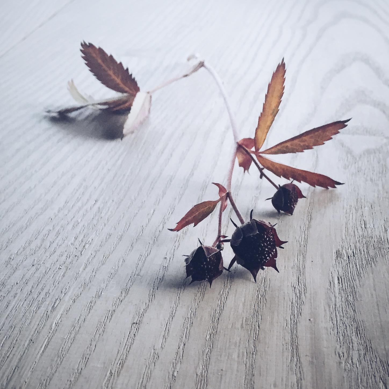 Skjønnheten ligger ofte gjemt i de små ting. Som kronen på en enkel blomst, årringene i et tre.