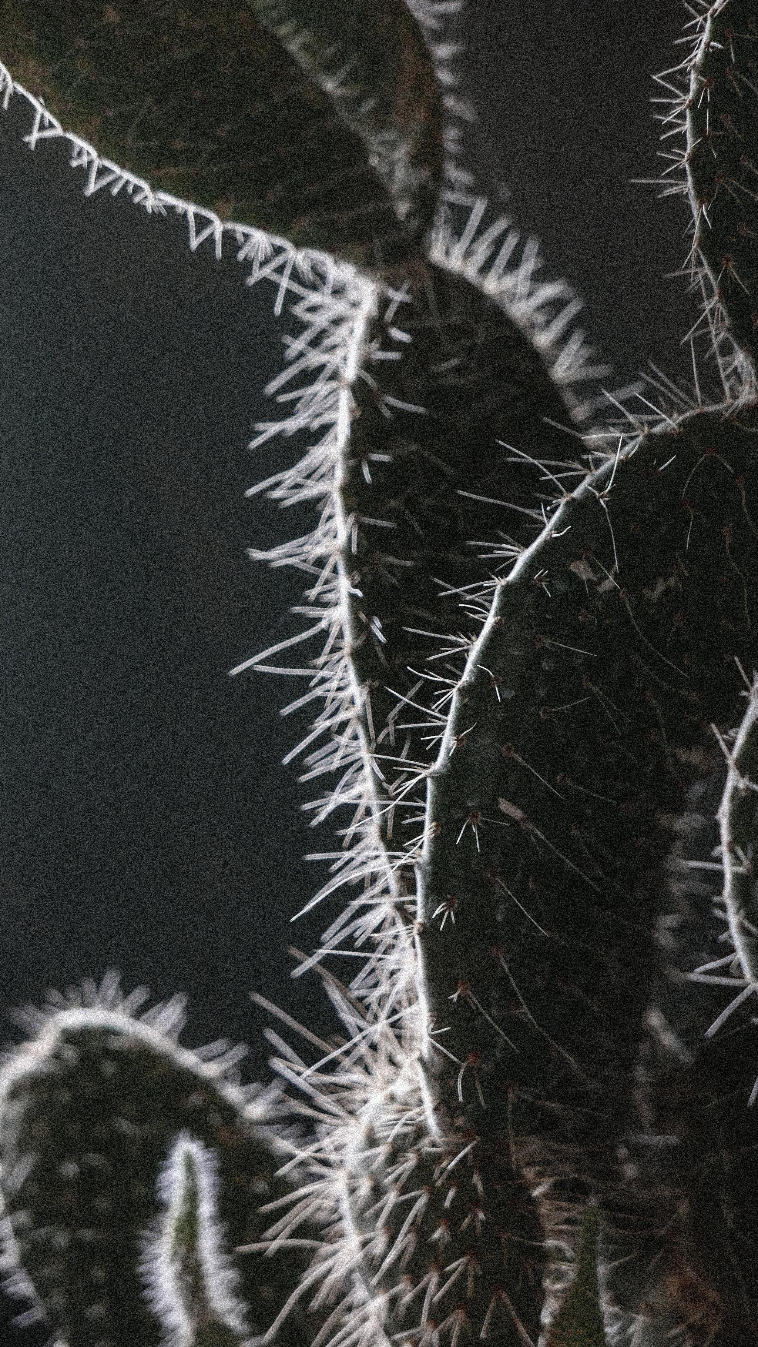 passiflora_20.jpg