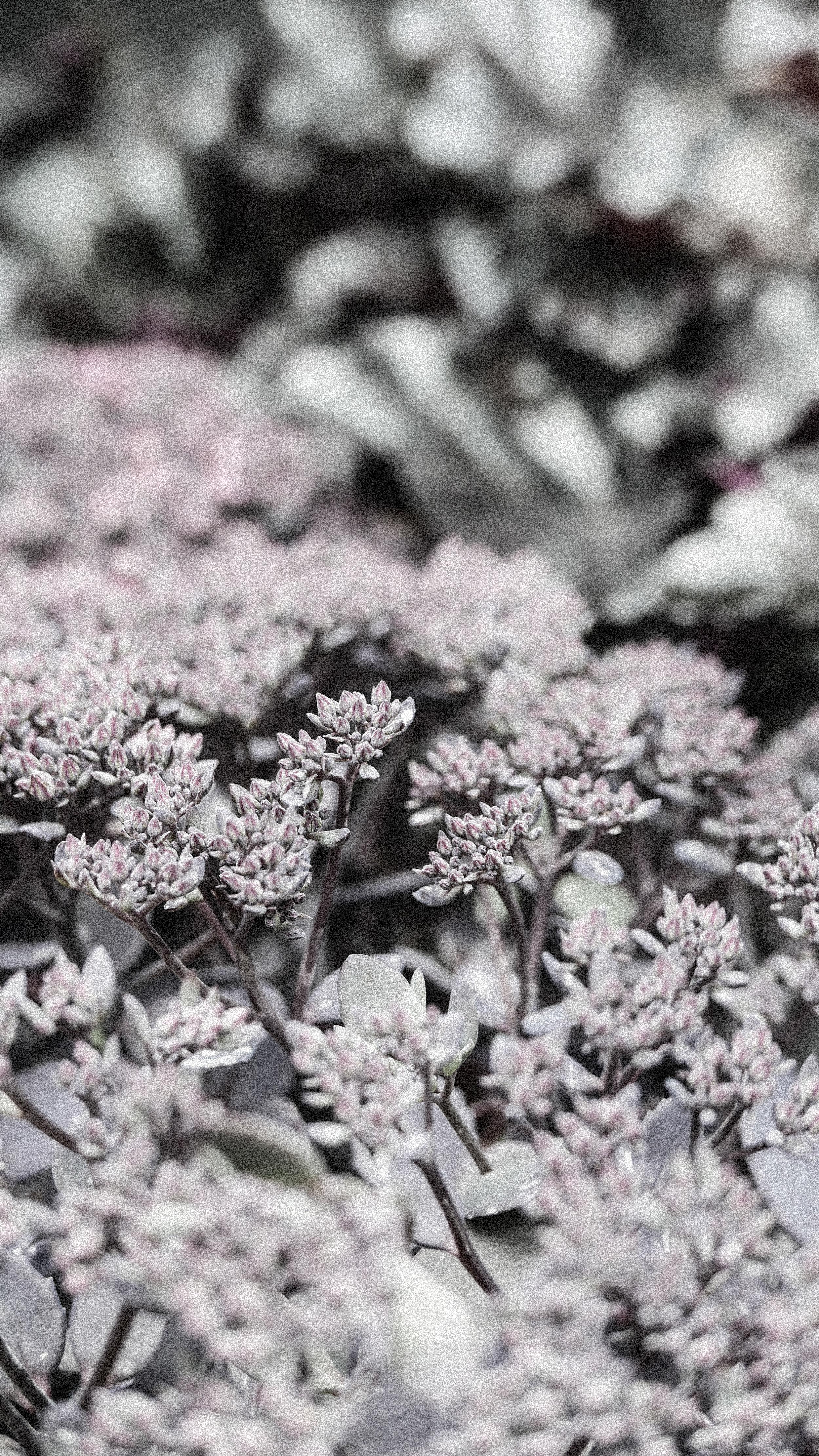 passiflora_12.jpg