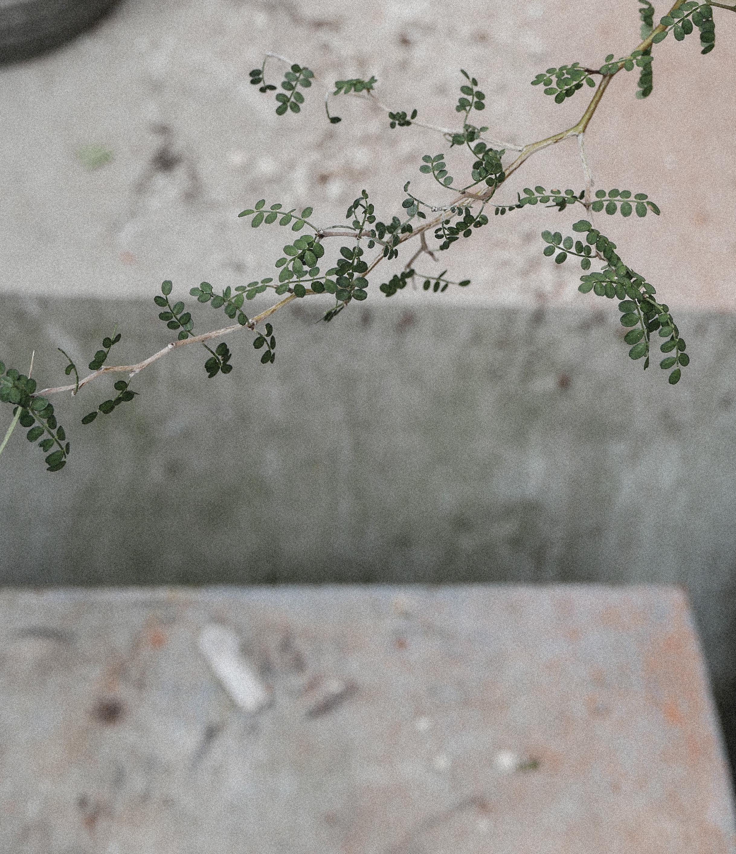 passiflora5.jpg