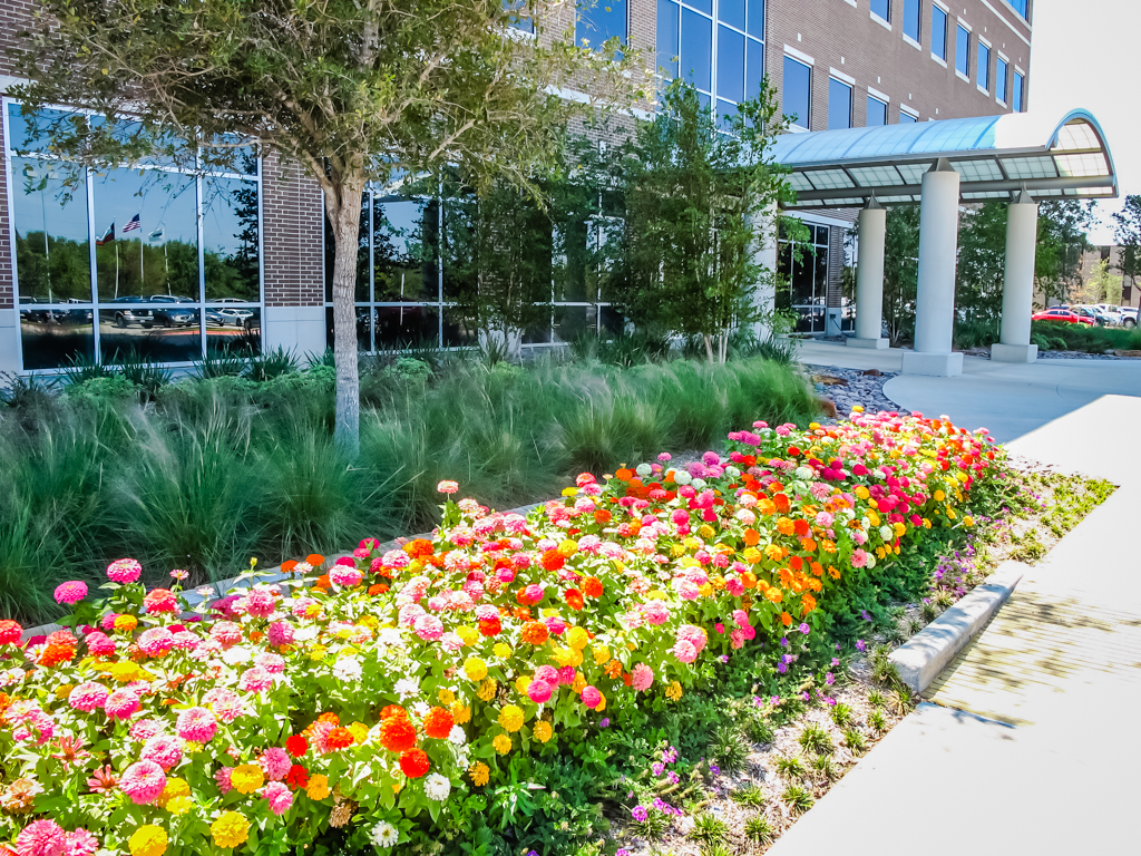 Hire a Landscape Maintenance Company in Houston today!