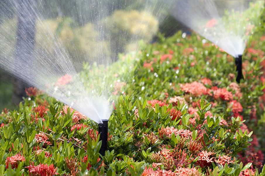 irrigation - web.jpg