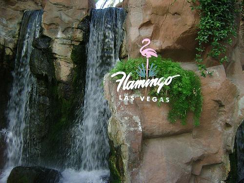 flamingowildlife.jpg