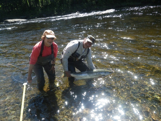 Harriette Beckerman and Salmon Lodge Guide Clement Bernier release a big salmon back to the Grand, Nice one Harriette!
