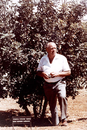 Schindler late in his life with his tree.