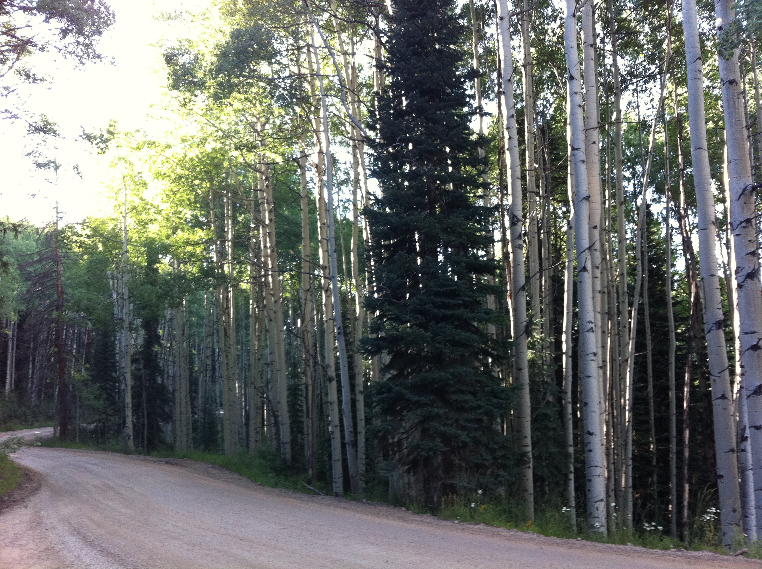 Near Kebler Pass