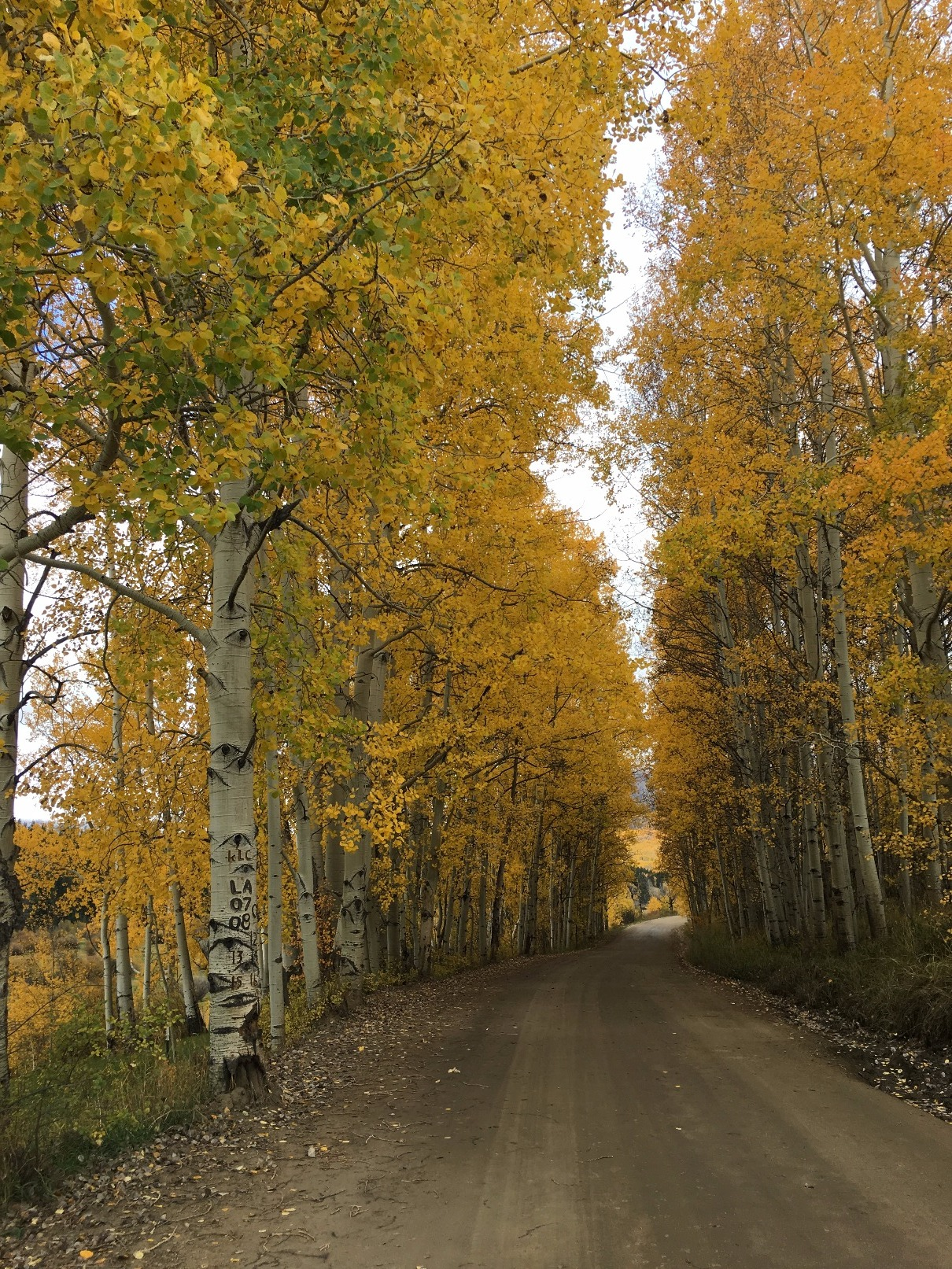 Driving Gunnison County Road 730 to Ohio Pass. This hidden gem is Not as crowded as nearby kebler pass.