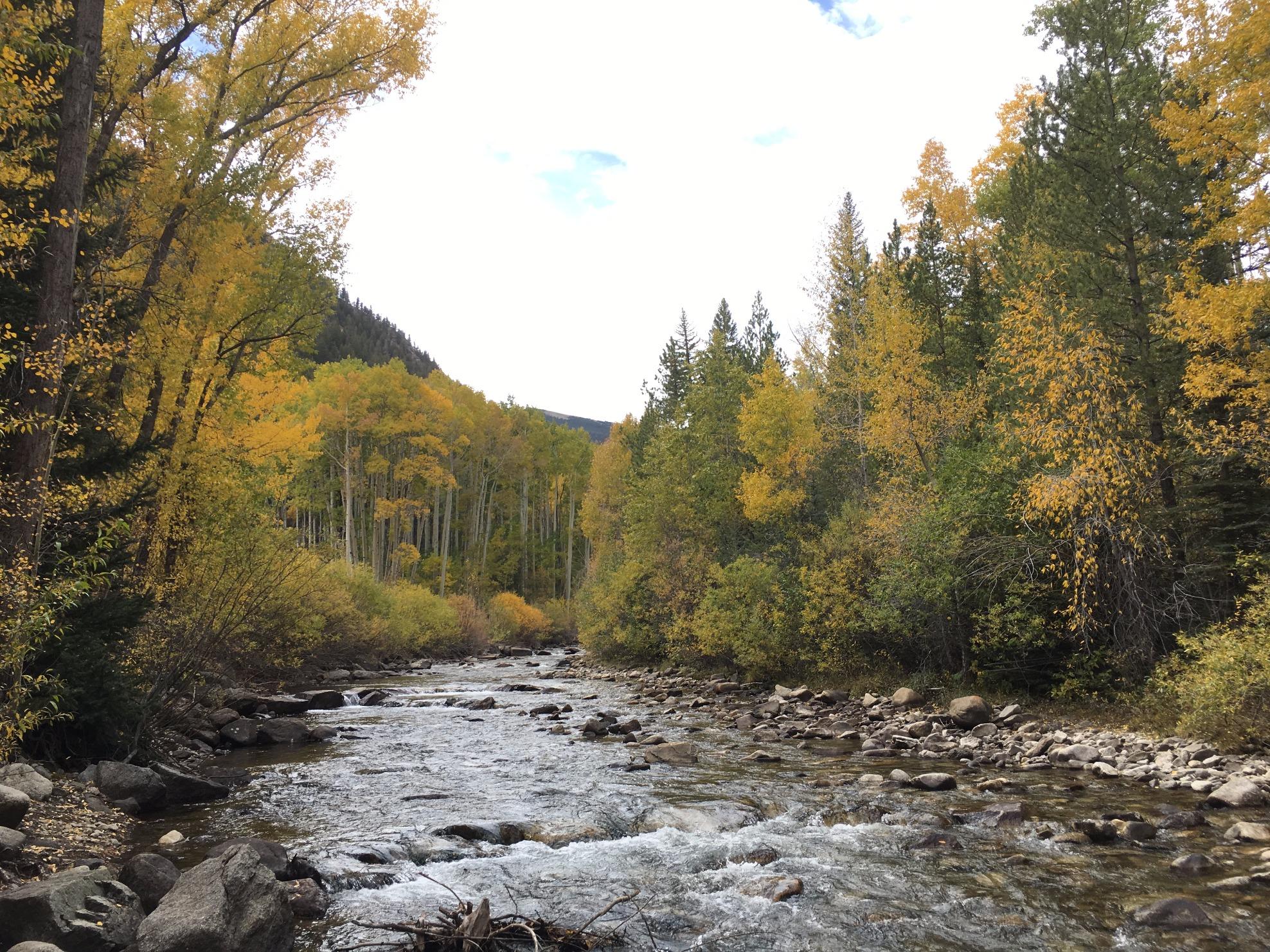 Fall along chalk creek in chaffee county